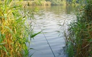 Речная плотва: особенности ловли