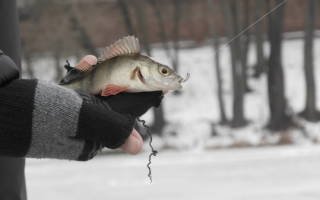 Псёл — место для рыбака