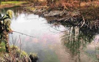 Осенне-зимний судак малых рек